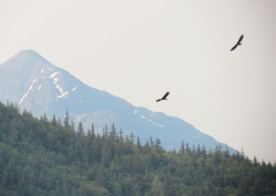 Eagles soar over Fort Seward.