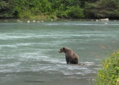 Bear watching at Chilkoot River is an evening activity.